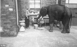 Elephant, A Lady, & Me